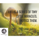 Life is a series of little miracles. Notice them.